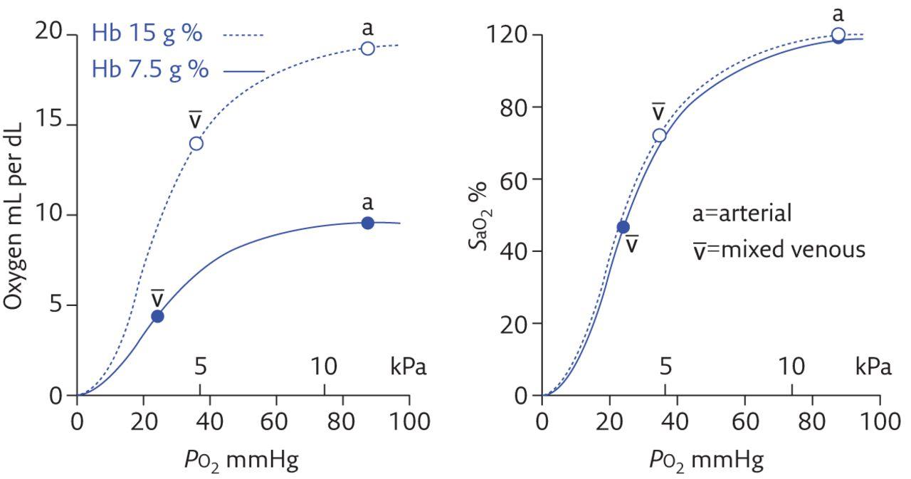 relationship between hemoglobin and oxygen